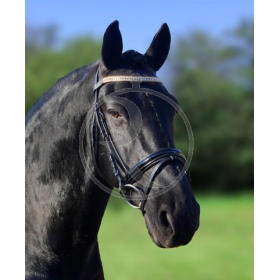 Durbery HB simple bridle